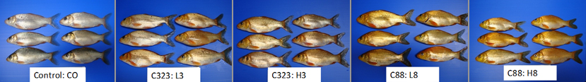 DOE-fish-feed-image-line-large