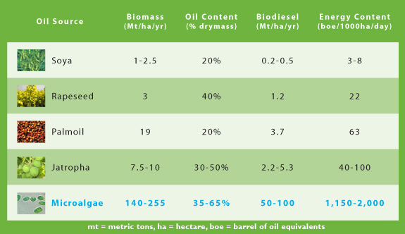comparison-table-oil-crops