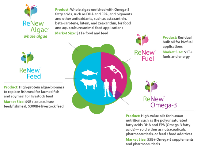 Cellana-Algae-to-Product-Fractions-Detail4