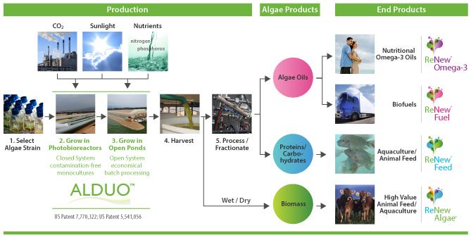 Cellana-Production-Technology